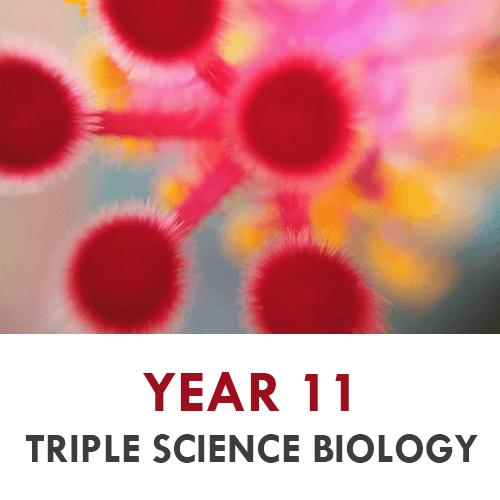Year 11 - Biology - Triple
